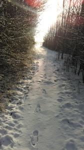 Trailtur i skoven 29 december